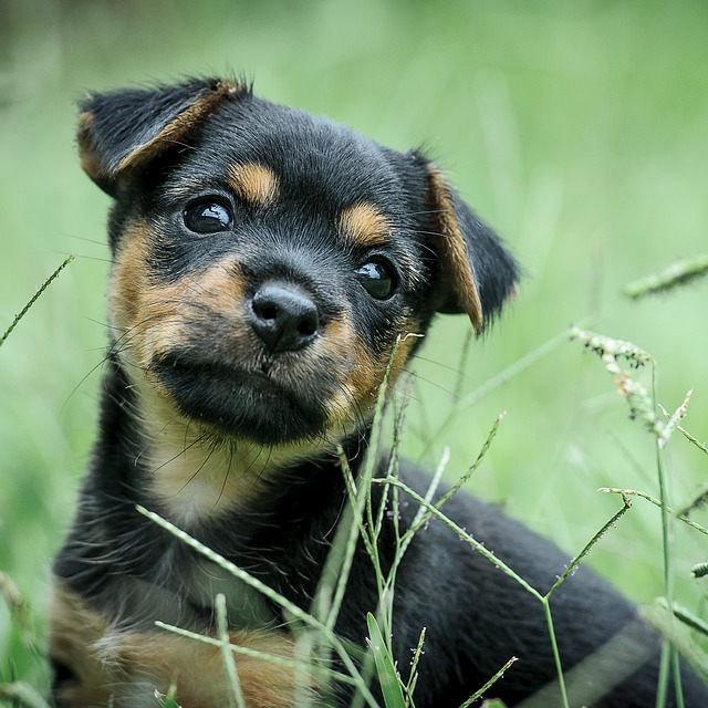 Puppy Foundation